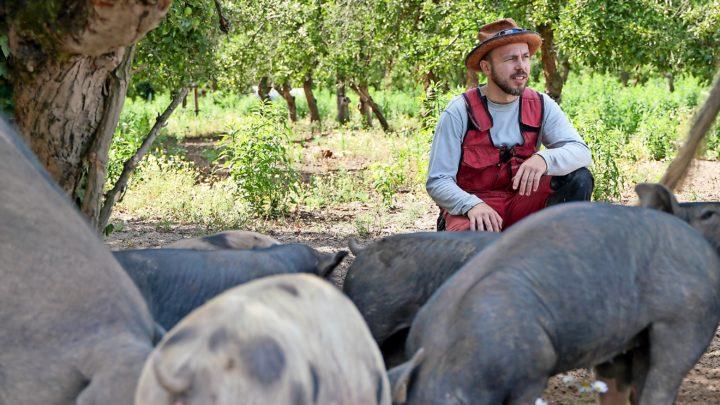 Grube – der perfekte Ort für Gänse, Schweine, Bauern und Plan B