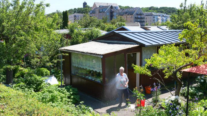 Ein paar Quadratmeter Welt: Streifzug durch die Gartensparte am Hinzenberg