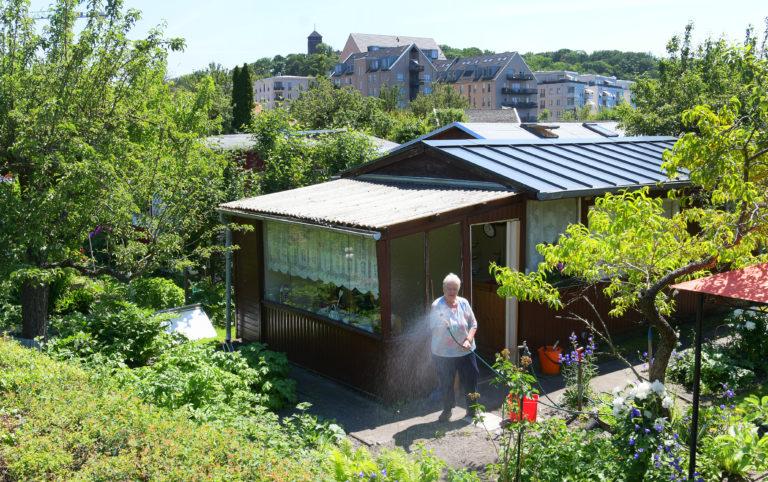 """Die Kleingartenanlage """"Am Hinzenberg"""" liegt hinter dem Lustgarten und gegenüber der Speicherstadt."""